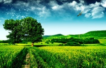 Lush-green-field-cloudy-31000